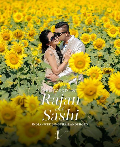 sunflower field pre wedding in thailand cover portrait 1